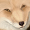 ★野良狐-60