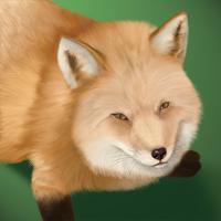 ★野良狐-200